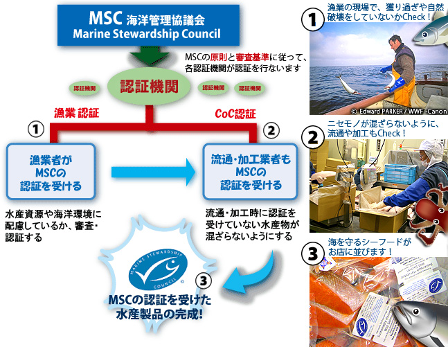 msc03.jpg