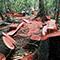 責任ある林産物の購入イメージ