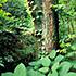 スマトラの森をめぐって:APP社サプライヤーと地域社会との長期化する紛争イメージ