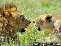 希少な野生生物の保護
