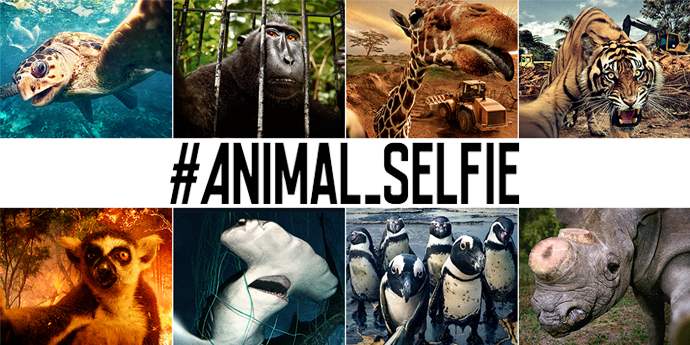 #ANIMAL_SELFIE