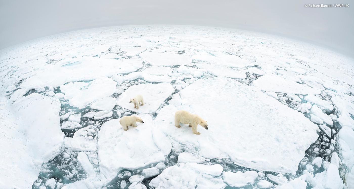 温暖 化 影響 地球 の