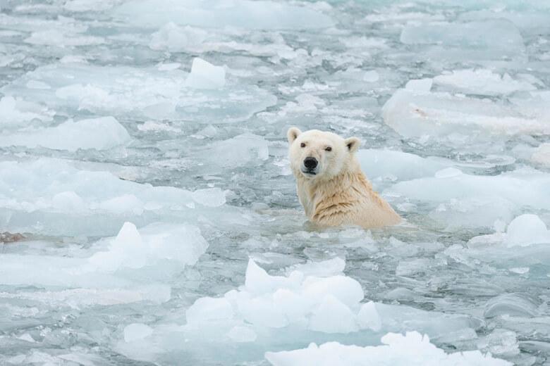 化 影響 温暖 地球