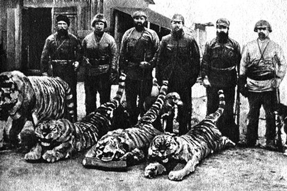 シベリアトラの保全に前進!ユダヤ自治州で初の個体数調査  WWFジャパン