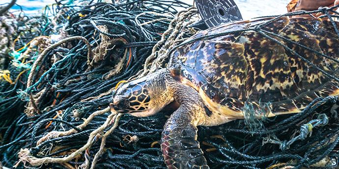 問題 海洋 プラスチック 第4回 海洋プラスチックごみの問題と、解決に向けて私たちができること