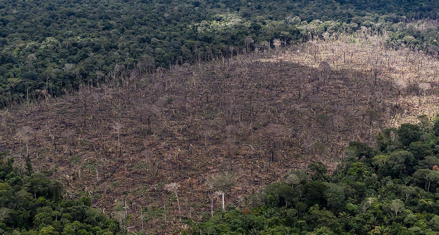 破壊 森林 森林破壊の原因と対策は?身近にできることから考えよう