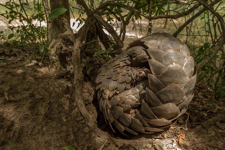 漢方 センザンコウ 焦点:感染源は野生動物か、それでも衰えぬ中国の「食欲」