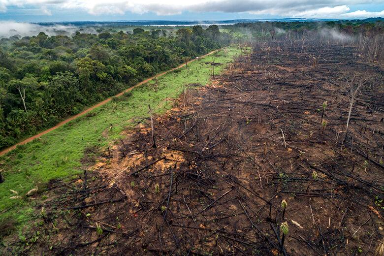 破壊 森林 森林破壊の原因って?森林破壊を止めるために、今日からできること WWFジャパン WWFジャパン