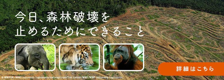 今日、森林破壊を止めるためにできること