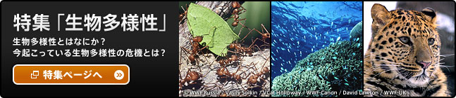 特集「生物多様性」生物多様性とはなにか?今起こっている生物多様性の危機とは?