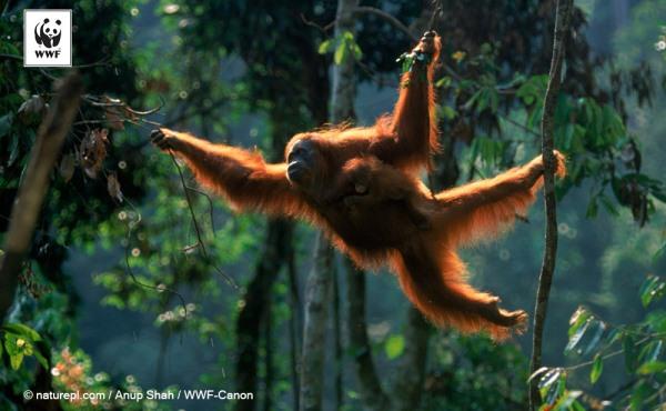 今週末まで!夢の島熱帯植物園で「ボルネオ展」開催中です