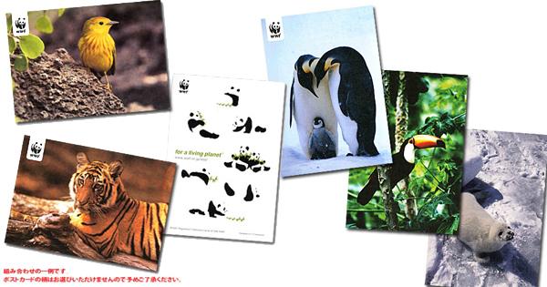 パンダショップのポストカードプレゼント企画、2月末までです!