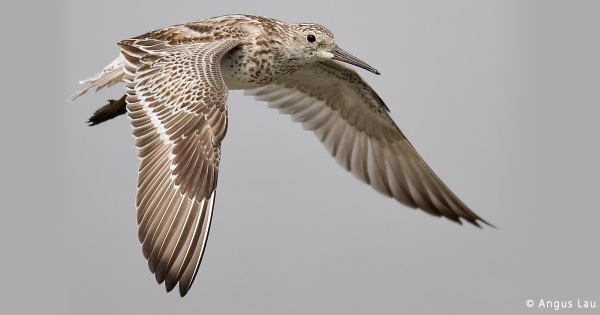 アサリを守ることは、渡り鳥を守ること!