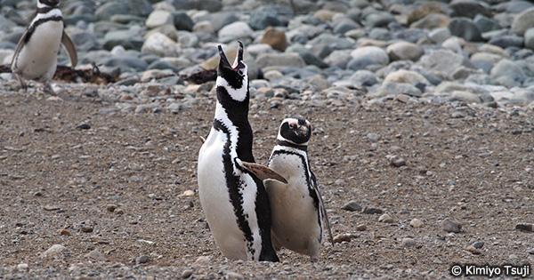 立春とペンギンと持続可能なシーフード