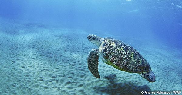 今日は世界ウミガメの日!(動画あり)