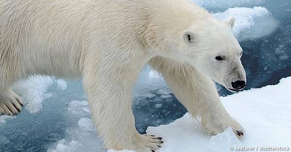 今年の恵方である北北西にいる動物は?