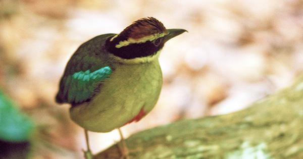 「種の保存法」改正が衆議院にて審議中!