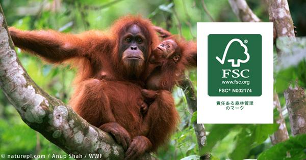 「森を守るマーク(FSC®️)を選ぼう!」キャンペーンが始まりました!