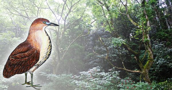 ミゾゴイの営巣を確認!どうなる、輪島の門前クリーンパーク建設問題