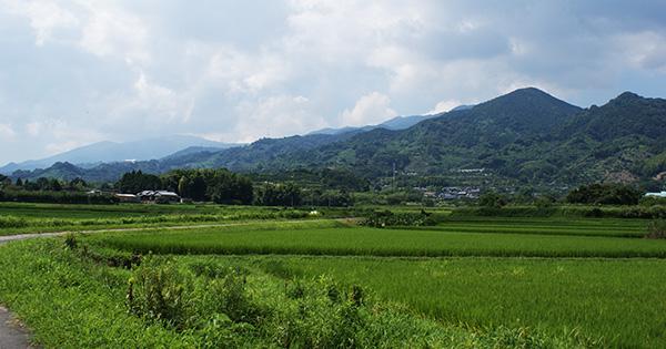 日本の水田の自然を守る取り組みについて