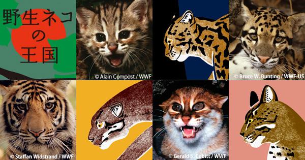 猫の日に寄せて 世界一「野生のネコ」がくらす島の森で